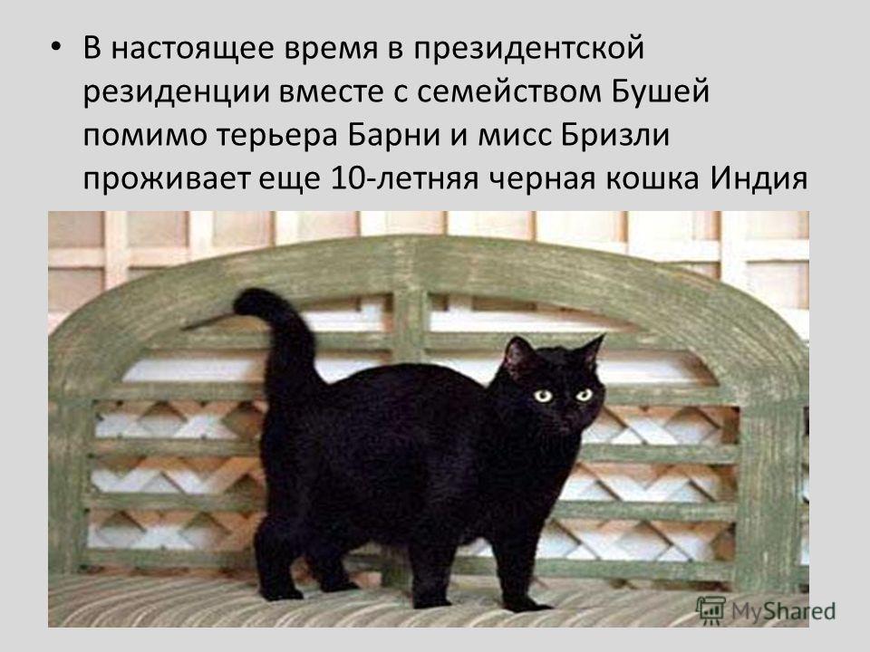 В настоящее время в президентской резиденции вместе с семейством Бушей помимо терьера Барни и мисс Бризли проживает еще 10-летняя черная кошка Индия