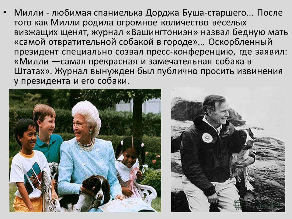 Милли - любимая спаниелька Дорджа Буша-старшего... После того как Милли родила огромное количество веселых визжащих щенят, журнал «Вашингтониэн» назвал бедную мать «самой отвратительной собакой в городе»... Оскорбленный президент специально созвал пр