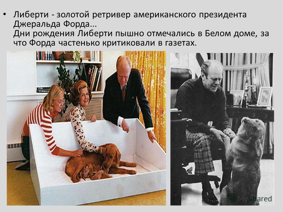 Либерти - золотой ретривер американского президента Джеральда Форда... Дни рождения Либерти пышно отмечались в Белом доме, за что Форда частенько критиковали в газетах.