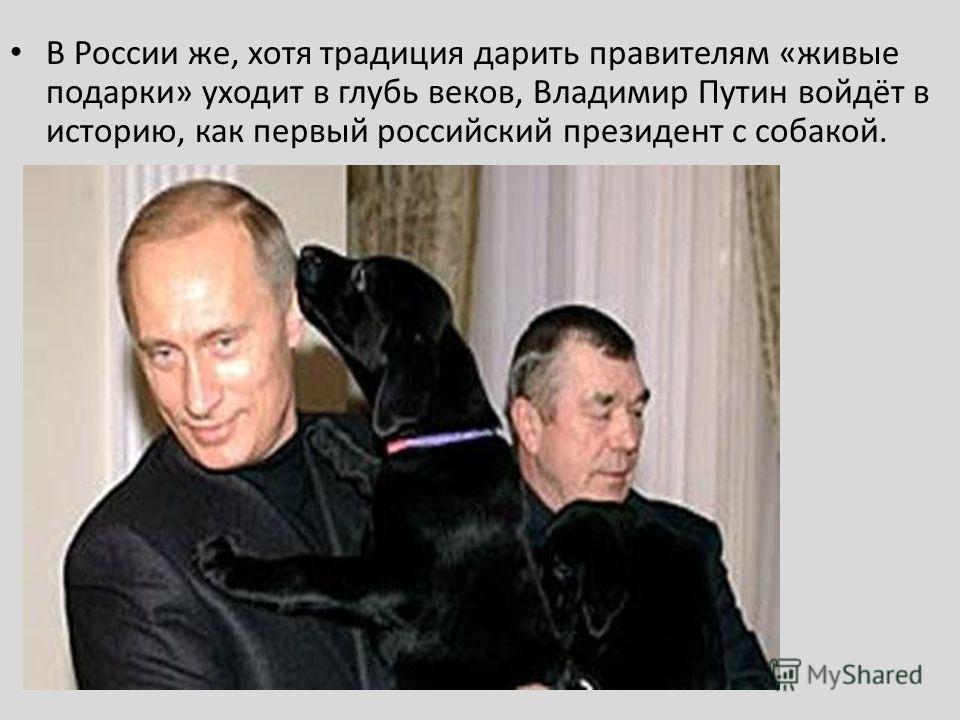 В России же, хотя традиция дарить правителям «живые подарки» уходит в глубь веков, Владимир Путин войдёт в историю, как первый российский президент с собакой.