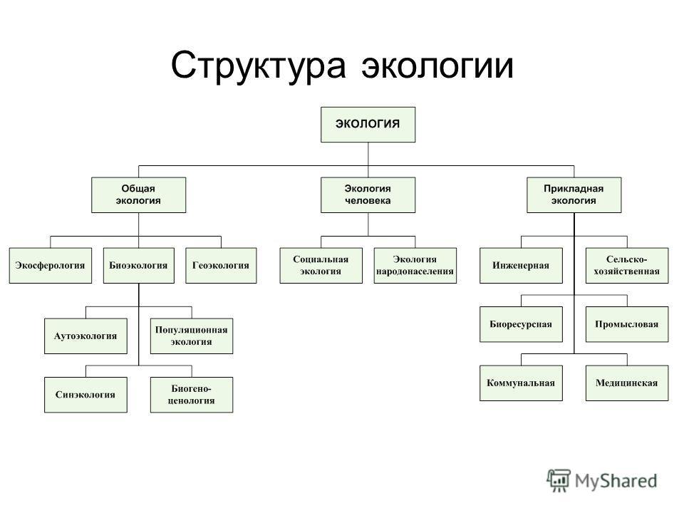 Структура экологии