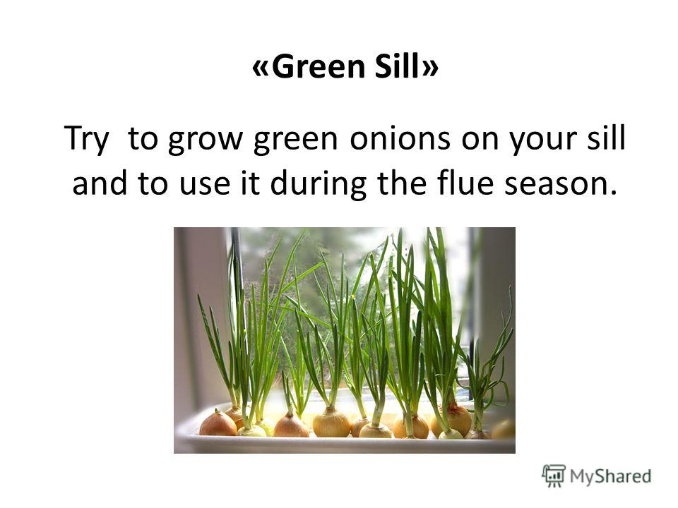 Try to grow green onions on your sill and to use it during the flue season. «Green Sill»