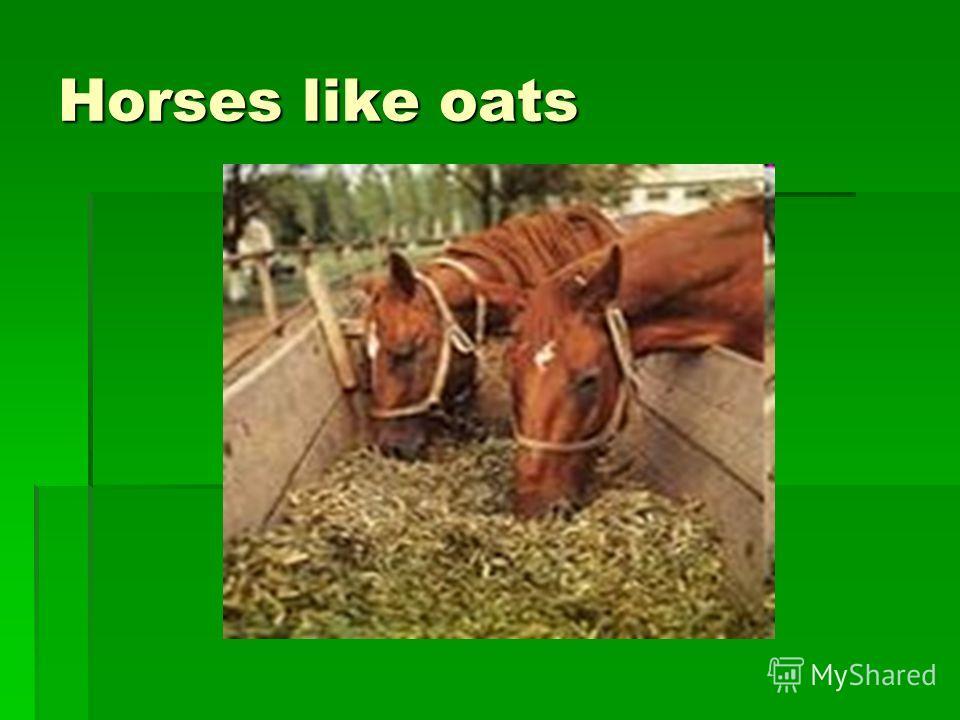Horses like oats