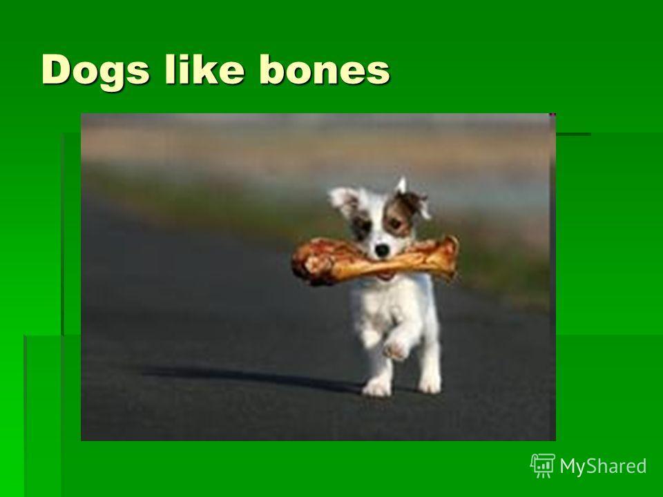 Dogs like bones