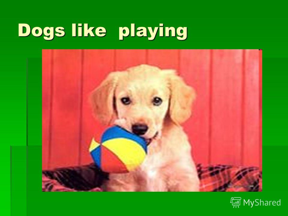 Dogs like playing