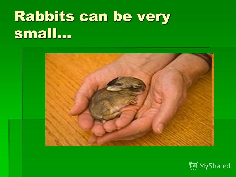 Rabbits can be very small…