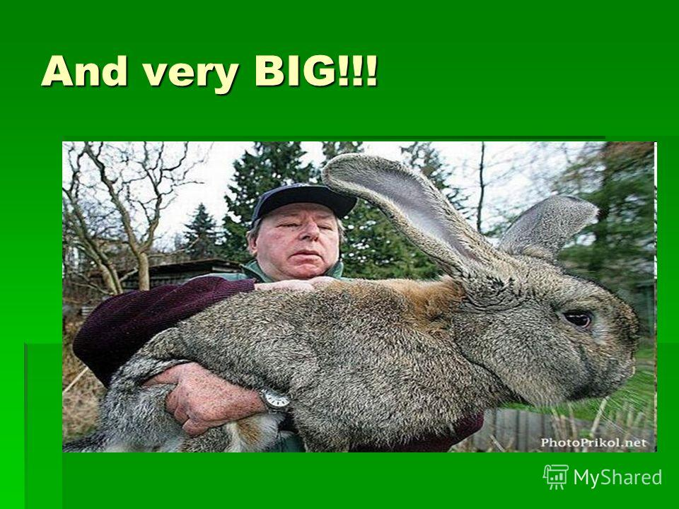 And very BIG!!!
