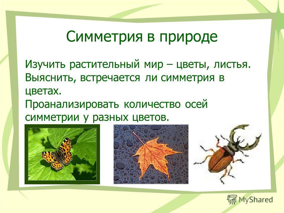 Симметрия в природе Изучить растительный мир – цветы, листья. Выяснить, встречается ли симметрия в цветах. Проанализировать количество осей симметрии у разных цветов.