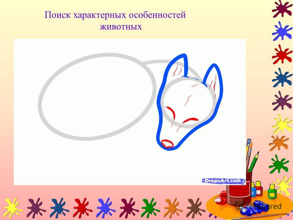 Поиск характерных особенностей животных