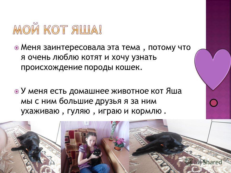 Меня заинтересовала эта тема, потому что я очень люблю котят и хочу узнать происхождение породы кошек. У меня есть домашнее животное кот Яша мы с ним большие друзья я за ним ухаживаю, гуляю, играю и кормлю.