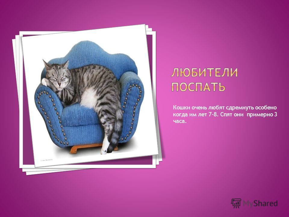 Кошки очень любят сдремнуть особенно когда им лет 7-8. Спят они примерно 3 часа.