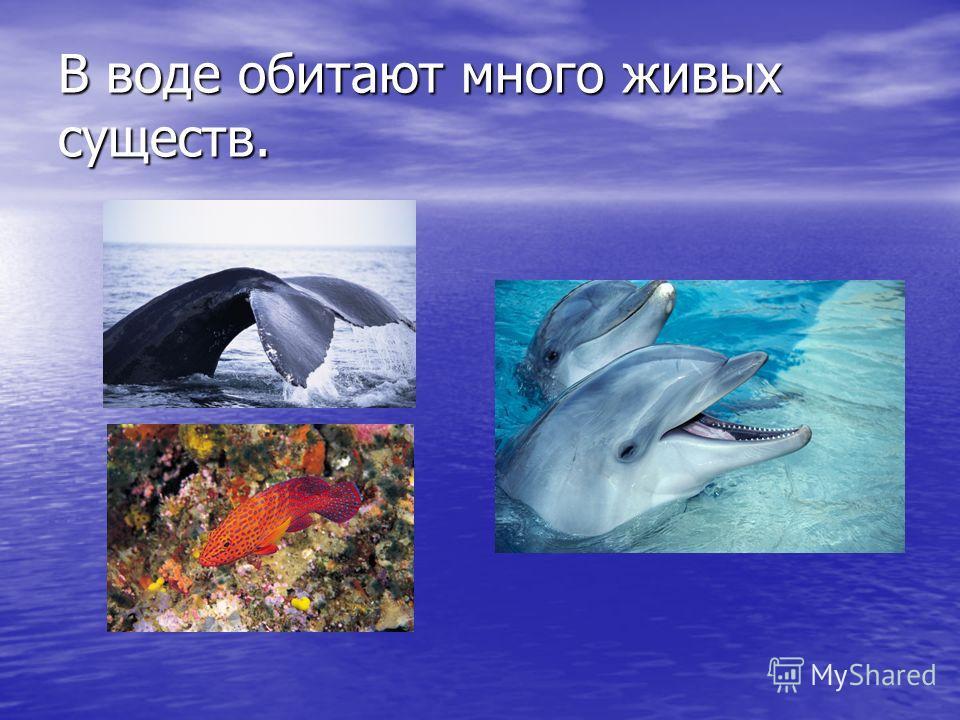 В воде обитают много живых существ.
