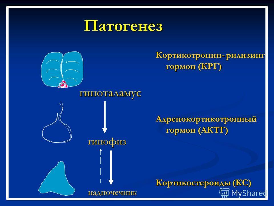 Патогенез Кортикотропин- рилизинг- гормон (КРГ) Адренокортикотропный гормон (АКТГ) Кортикостероиды (КС) гипоталамус гипофиз надпочечник