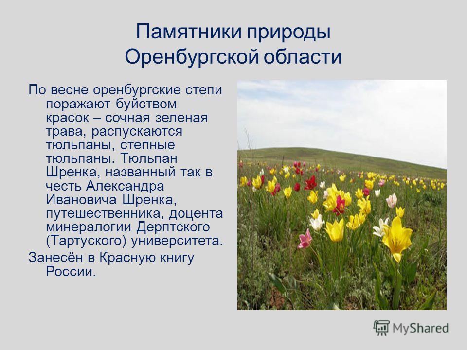 Памятники природы Оренбургской области По весне оренбургские степи поражают буйством красок – сочная зеленая трава, распускаются тюльпаны, степные тюльпаны. Тюльпан Шренка, названный так в честь Александра Ивановича Шренка, путешественника, доцента м