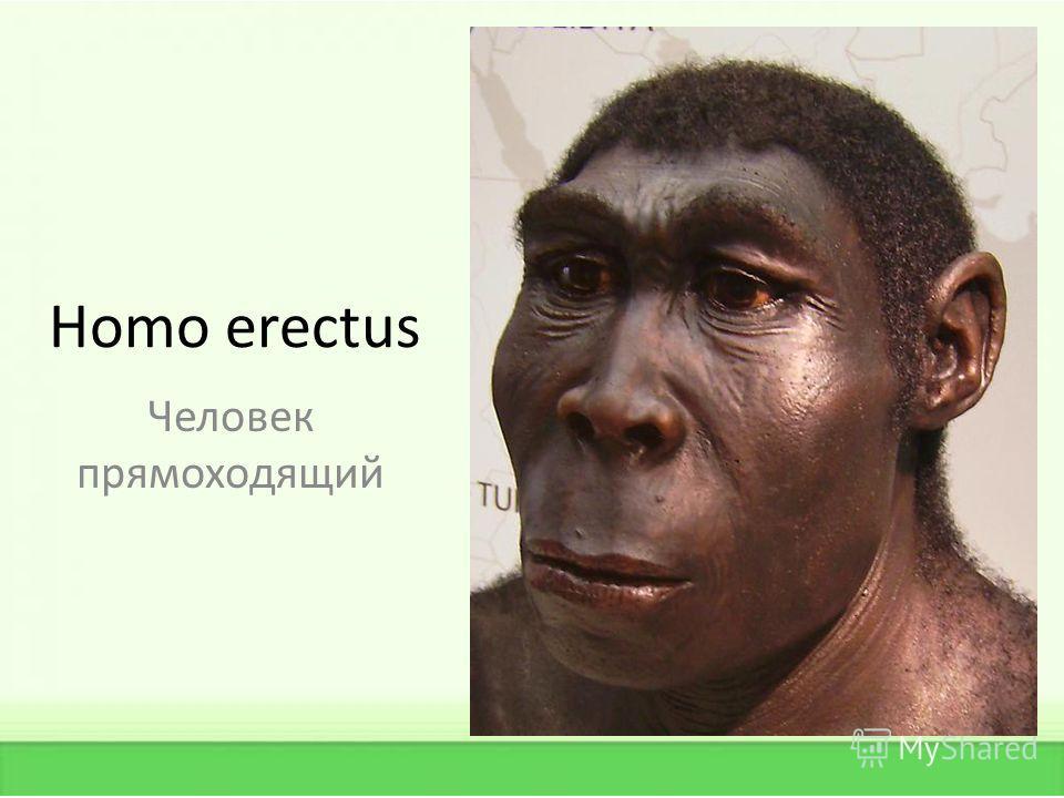 Homo еrectus Человек прямоходящий