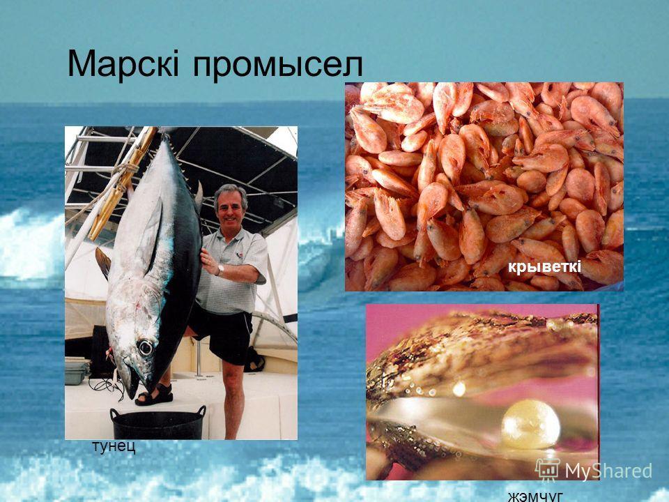 Марскі промысел тунец жемчуг крыветкі