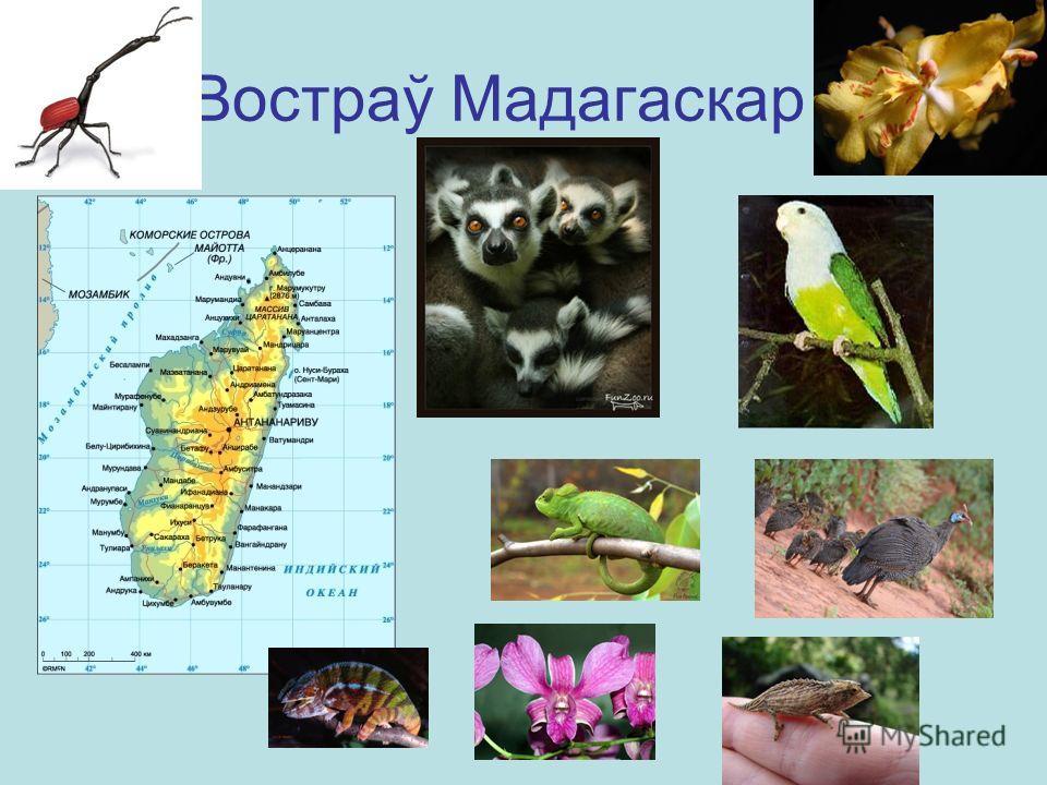 Востраў Мадагаскар