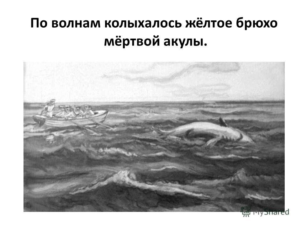 По волнам колыхалось жёлтое брюхо мёртвой акулы.