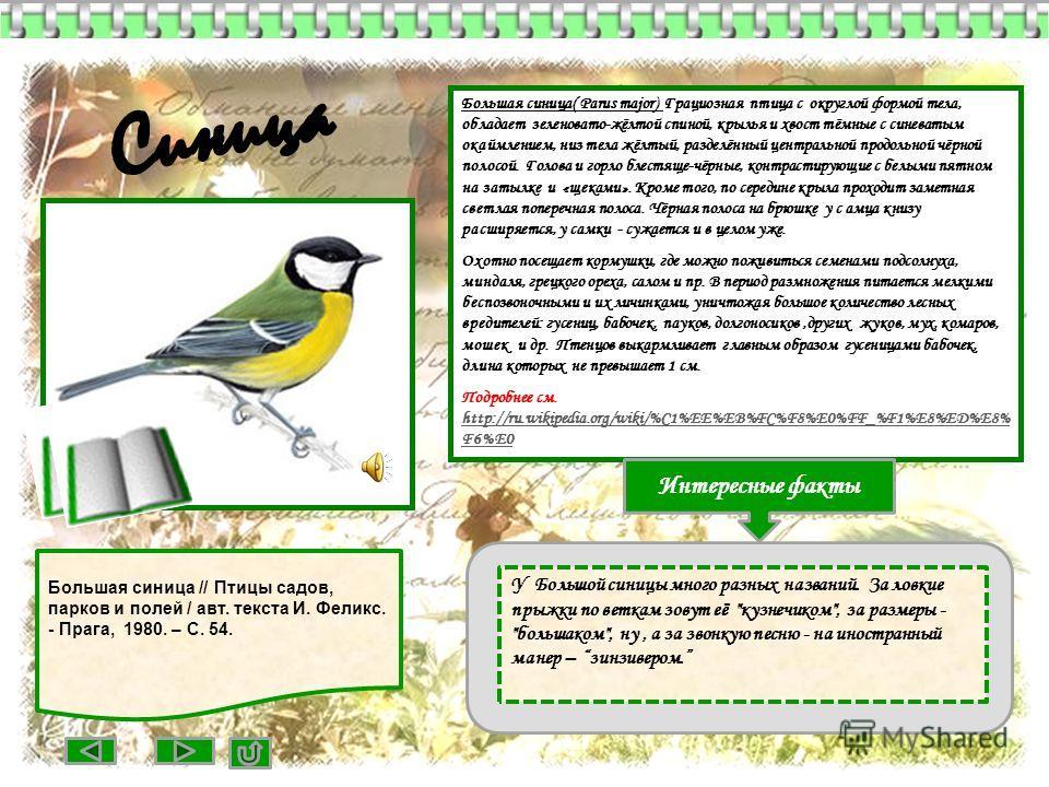 Большая синица( Parus major) Грациозная птица с округлой формой тела, обладает зеленовато-жёлтой спиной, крылья и хвост тёмные с синеватым окаймлением, низ тела жёлтый, разделённый центральной продольной чёрной полосой. Голова и горло блестяще-чёрные