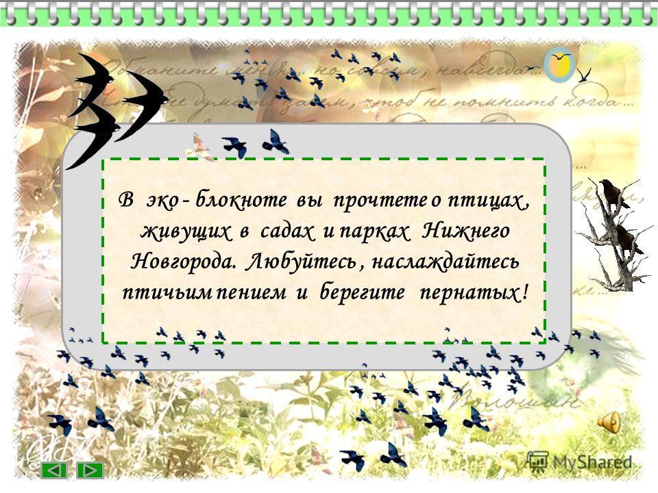В эко - блокноте вы прочтете о птицах, живущих в садах и парках Нижнего Новгорода. Любуйтесь, наслаждайтесь птичьим пением и берегите пернатых !