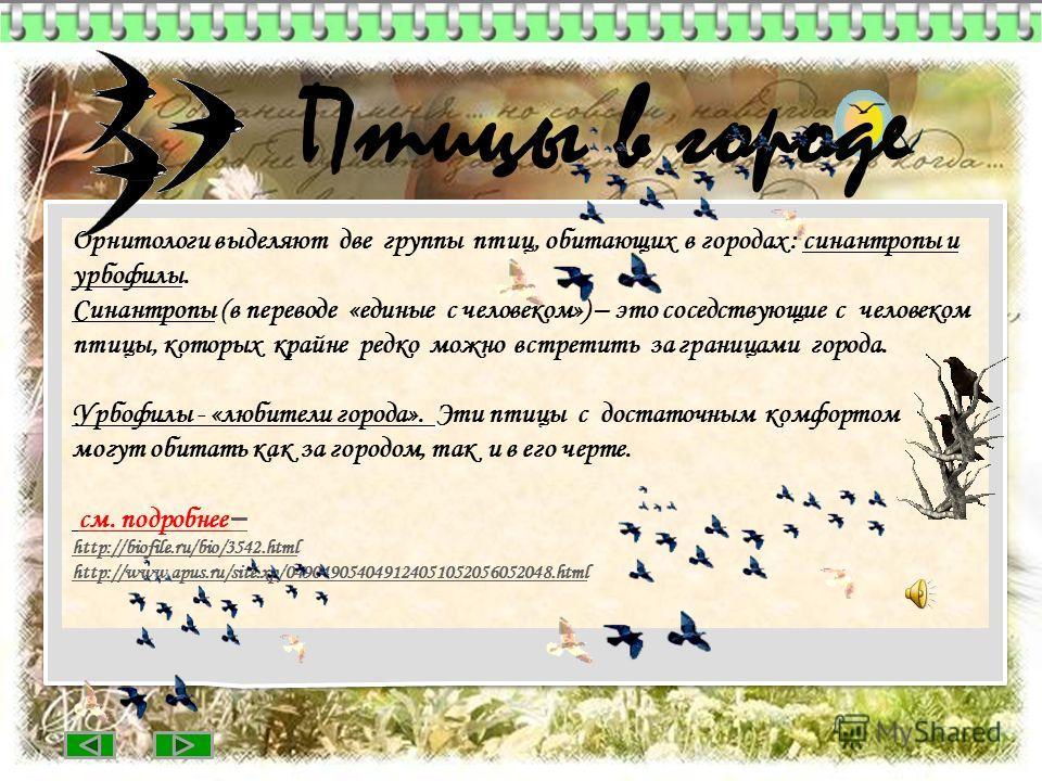 Орнитологи выделяют две группы птиц, обитающих в городах : синантропы и урбофилы. Синантропы (в переводе «единые с человеком») – это соседствующие с человеком птицы, которых крайне редко можно встретить за границами города. Урбофилы - «любители город