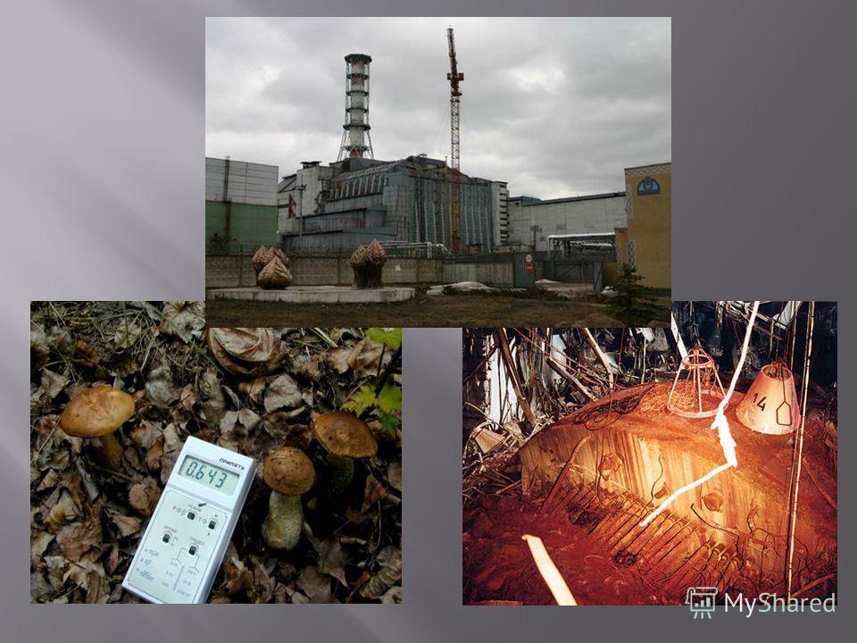 Поля під Чорнобилем після аварії перестали бути годувальниками. Усе, що зростало на них після квітня, «усмоктувало» смертоносна радіацію. Поля під Чорнобилем після аварії перестали бути годувальниками. Усе, що зростало на них після квітня, «усмоктува