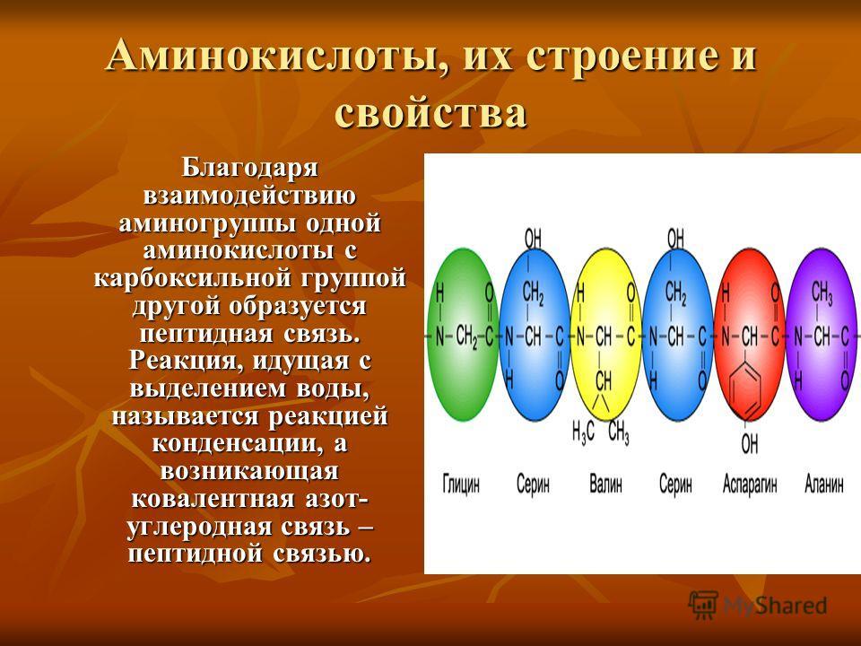Аминокислоты, их строение и свойства Благодаря взаимодействию аминогруппы одной аминокислоты с карбоксильной группой другой образуется пептидная связь. Реакция, идущая с выделением воды, называется реакцией конденсации, а возникающая ковалентная азот