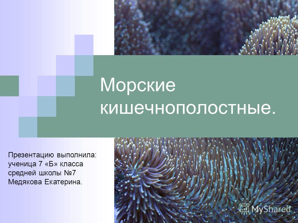 Морские кишечнополостные. Презентацию выполнила: ученица 7 «Б» класса средней школы 7 Медякова Екатерина.