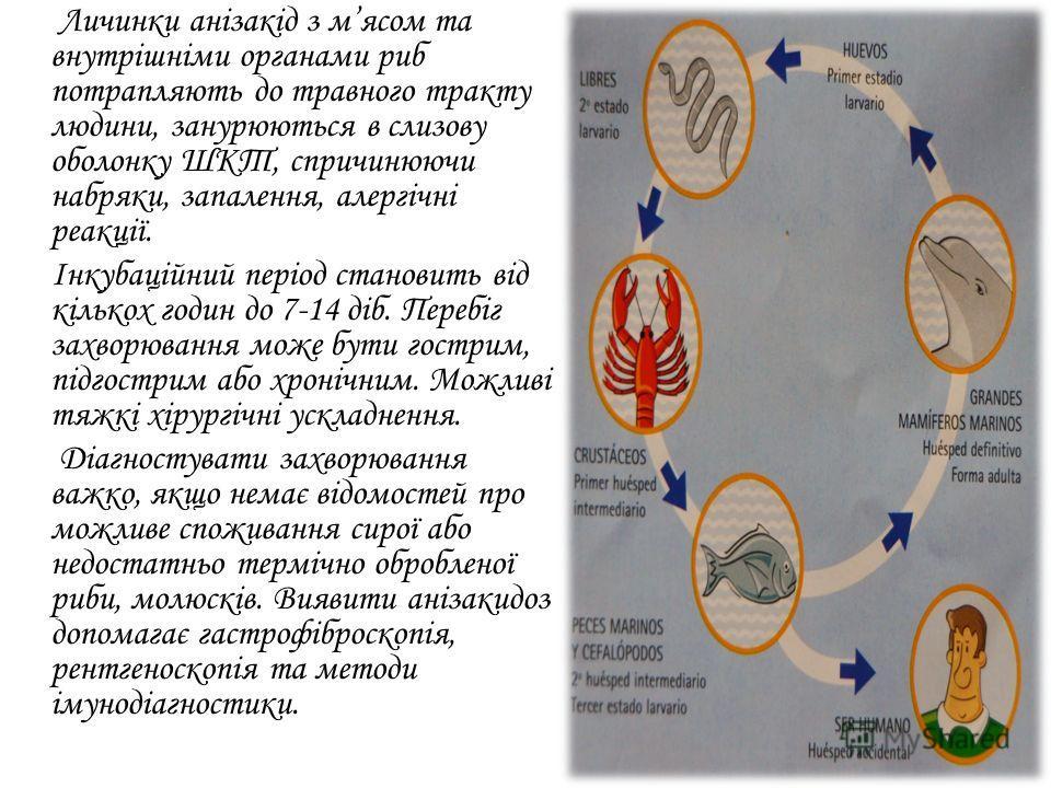 Личинки анізакід з мясом та внутрішніми органами рыб потрапляють до травного тракту людини, занурюються в слизову болонку ШКТ, спричинюючи набряки, запалення, алергічні реакції. Інкубаційний період становить від кількох годин до 7-14 діб. Перебіг зах