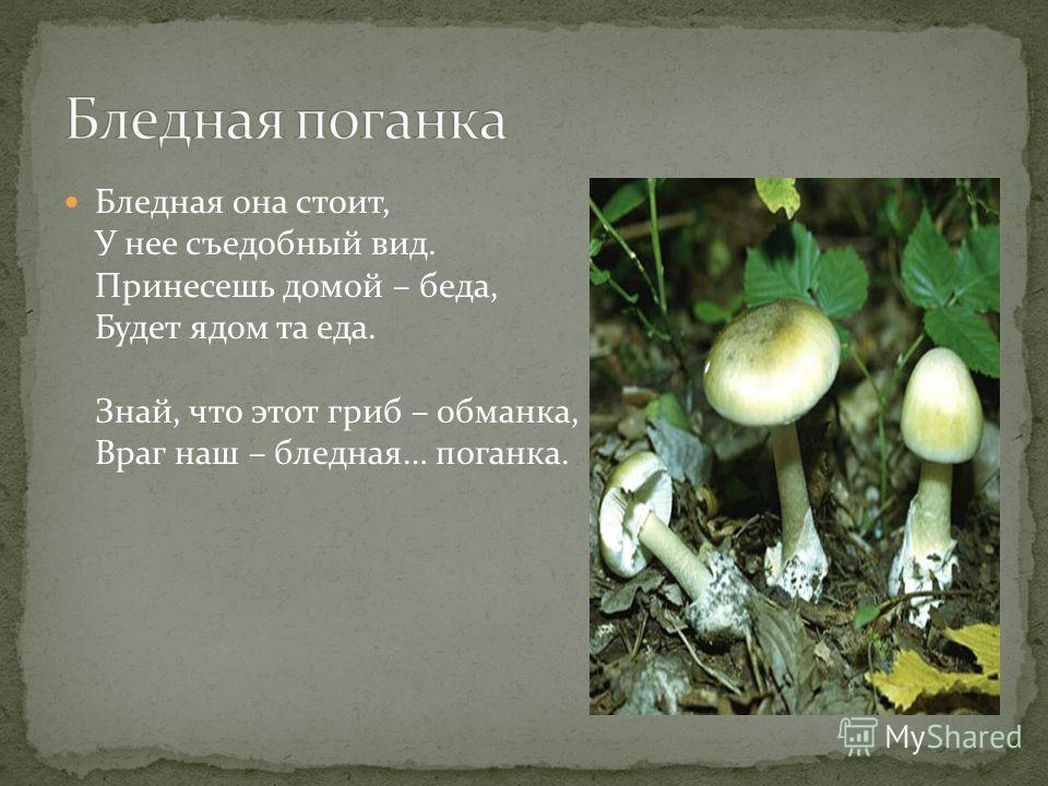 Бледная она стоит, У нее съедобный вид. Принесешь домой – беда, Будет ядом та еда. Знай, что этот гриб – обманка, Враг наш – бледная… поганка.