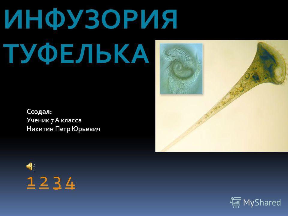 ИНФУЗОРИЯ ТУФЕЛЬКА Создал: Ученик 7 А класса Никитин Петр Юрьевич 11 2 3 4234