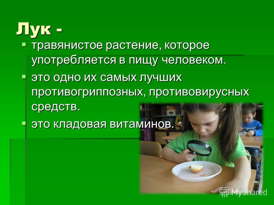 Лук - травянистое растение, которое употребляется в пищу человеком. травянистое растение, которое употребляется в пищу человеком. это одно их самых лучших противогриппозных, противовирусных средств. это одно их самых лучших противогриппозных, противо