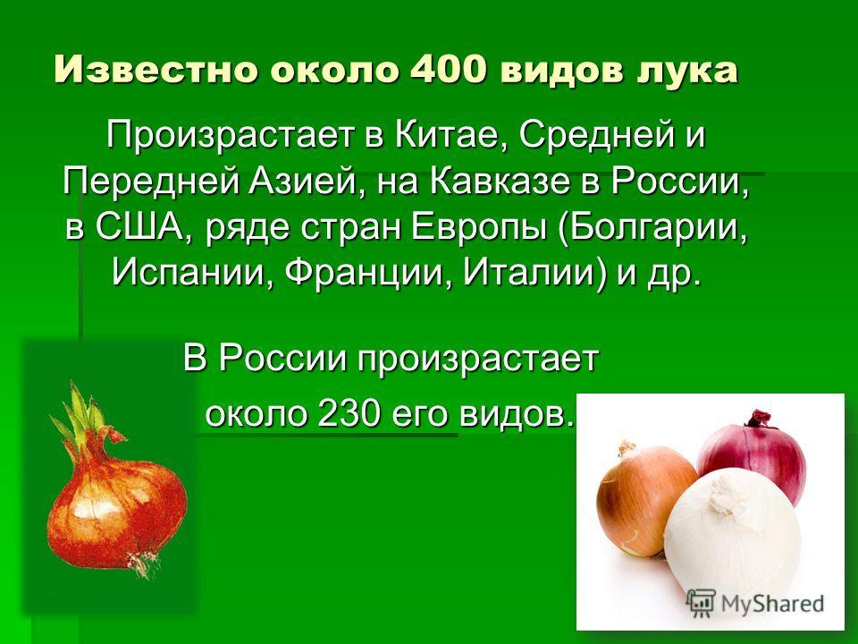 Известно около 400 видов лука Произрастает в Китае, Средней и Передней Азией, на Кавказе в России, в США, ряде стран Европы (Болгарии, Испании, Франции, Италии) и др. Произрастает в Китае, Средней и Передней Азией, на Кавказе в России, в США, ряде ст
