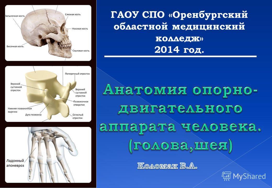ГАОУ СПО «Оренбургский областной медицинский колледж» 2014 год.