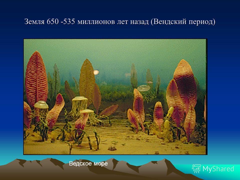 Земля 650 -535 миллионов лет назад (Вендский период) Ведское море