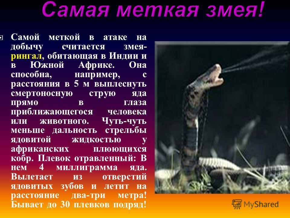 Самой меткой в атаке на добычу считается змея - рингал, обитающая в Индии и в Южной Африке. Она способна, например, с расстояния в 5 м выплеснуть смертоносную струю яда прямо в глаза приближающегося человека или животного. Чуть - чуть меньше дальност