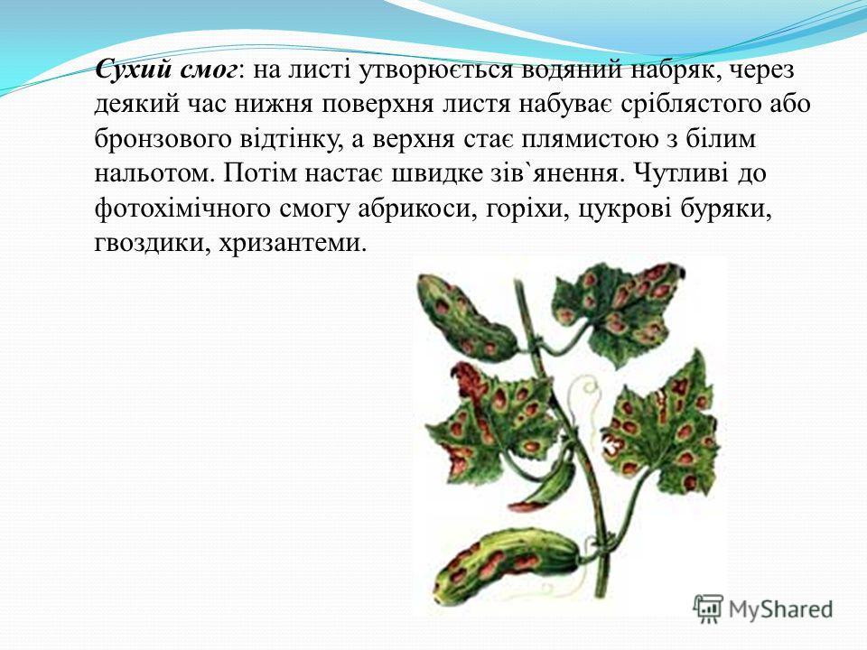 Сухий смог: на листі утворюється водяний набряк, через деякий час нижня поверхня листя набуває сріблястого обо бронзового відтінку, а верхня стає плямистою з білим нальотом. Потім настає швидке зів`янення. Чутливі до фотохімічного смогу абрикоси, гор