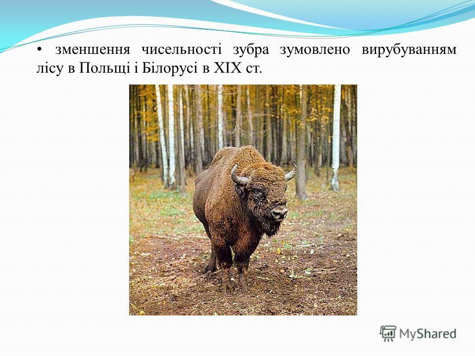 зменшення чисельності зубра зумовлено вирубуванням лісу в Польщі і Білорусі в ХІХ ст.