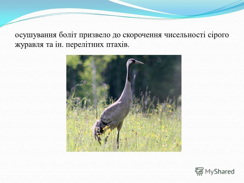 осушування боліт призвело до скорочення чисельності сірого журавля та ін. перелітних птахів.