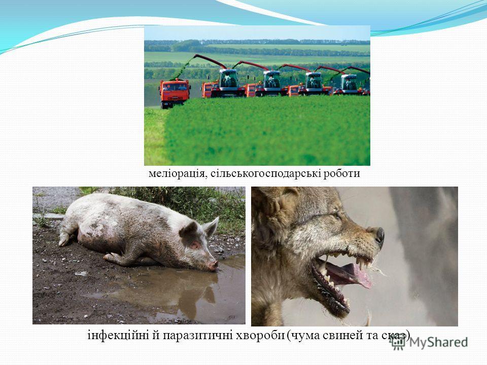 меліорація, сільськогосподарські роботи інфекційні й паразитичні хвороби (чума свиней та сказ)