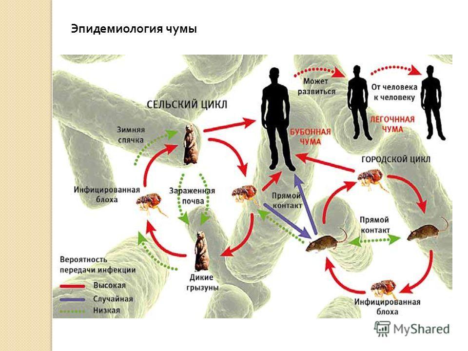 Эпидемиология чумы