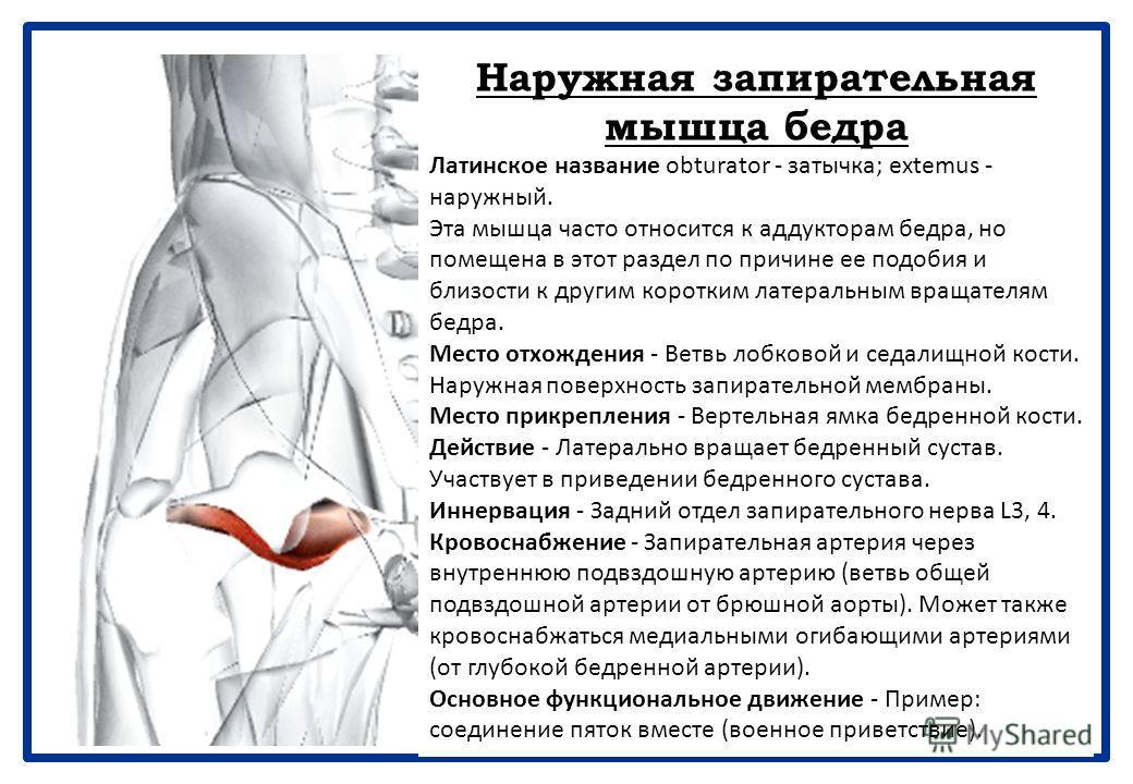 Нижняя близнецовая мышца Латинское название gemellus - близнец; inferior - нижний. Место отхождения - Верхний край седалищного бугра. Место прикрепления - С сухожилием запирательной мышцы на медиальной поверхности большого вертела бедренной кости. Де
