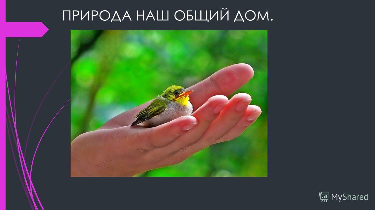 ПРИРОДА НАШ ОБЩИЙ ДОМ.