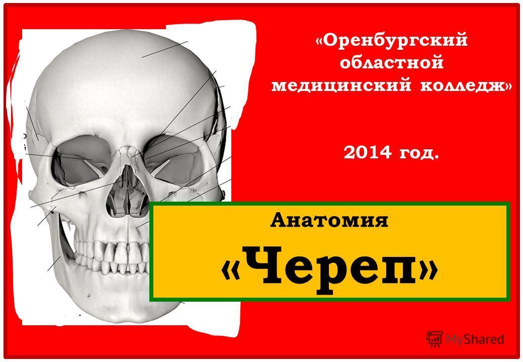 «Оренбургский областной медицинский колледж» 2014 год. Анатомия «Череп»