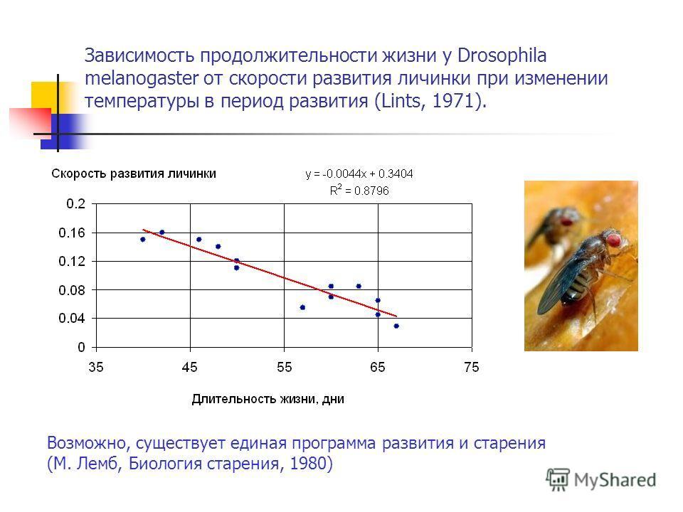 Зависимость продолжительности жизни у Drosophila melanogaster от скорости развития личинки при изменении температуры в период развития (Lints, 1971). Возможно, существует единая программа развития и старения (М. Лемб, Биология старения, 1980)