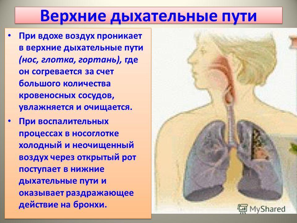 Верхние дыхательные пути