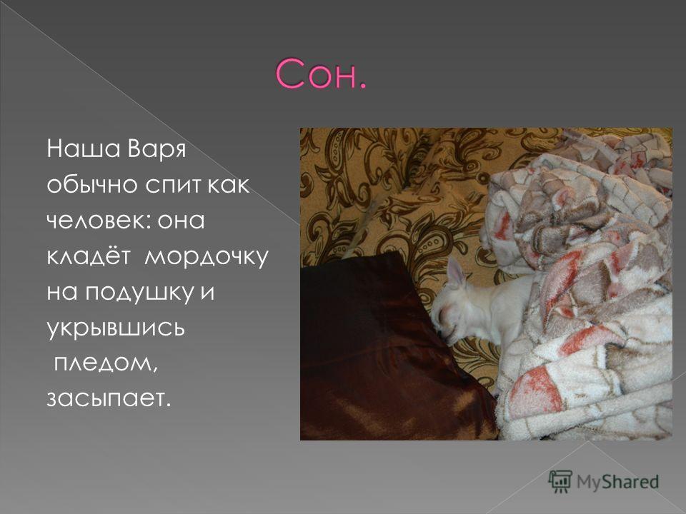 Наша Варя обычно спит как человек: она кладёт мордочку на подушку и укрывшись пледом, засыпает.