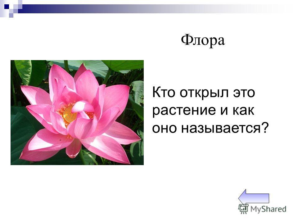 Кто открыл это растение и как оно называется? Флора