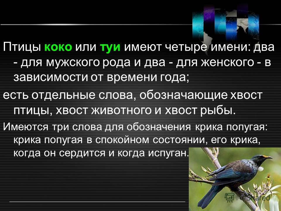 Птицы коко или туи имеют четыре имени: два - для мужского рода и два - для женского - в зависимости от времени года; есть отдельные слова, обозначающие хвост птицы, хвост животного и хвост рыбы. Имеются три слова для обозначения крика попугая: крика