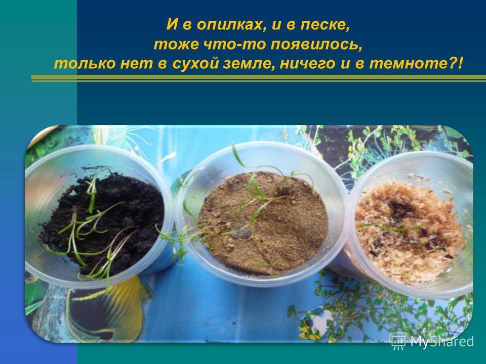 И в опилках, и в песке, тоже что-то появилось, только нет в сухой земле, ничего и в темноте?!